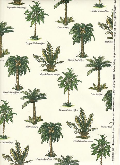 Palm Tree Varieties With Images