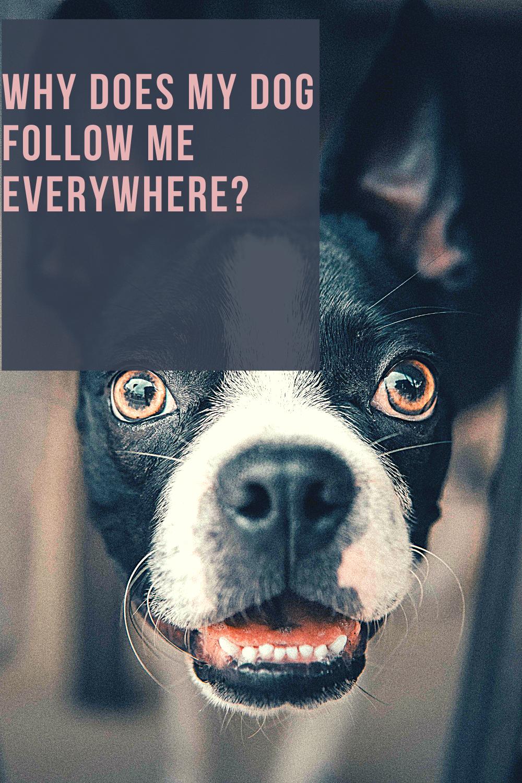41++ Why does my dog always follow me info