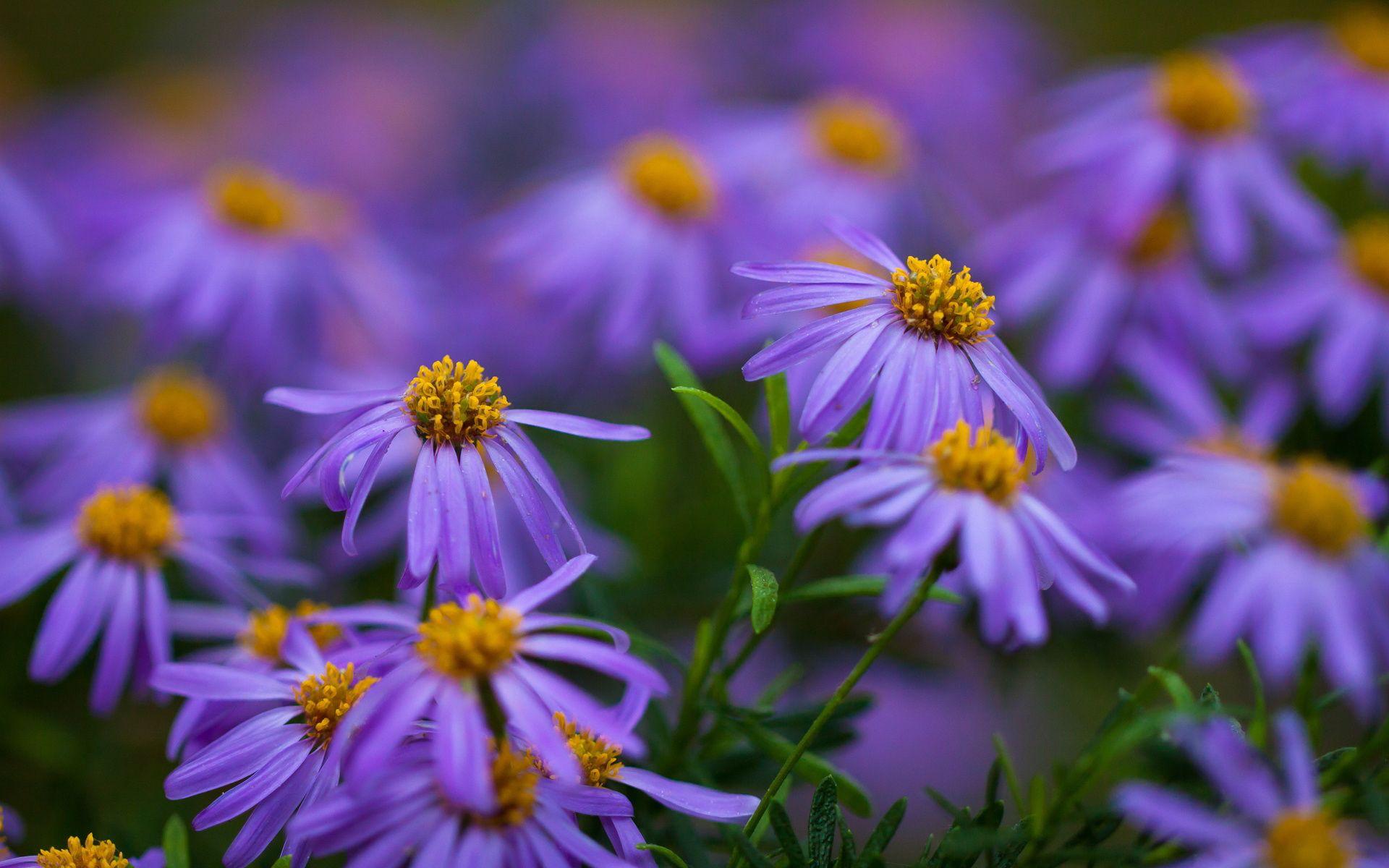Little purple flowers hd gardens and flowers hd wallpapers pinterest little purple flowers hd mightylinksfo