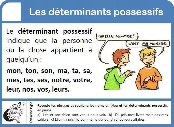 les déterminants possessifs | Les déterminants, Activités de classe, Phrases en français