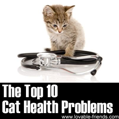 The Top 10 Cat Health Problems