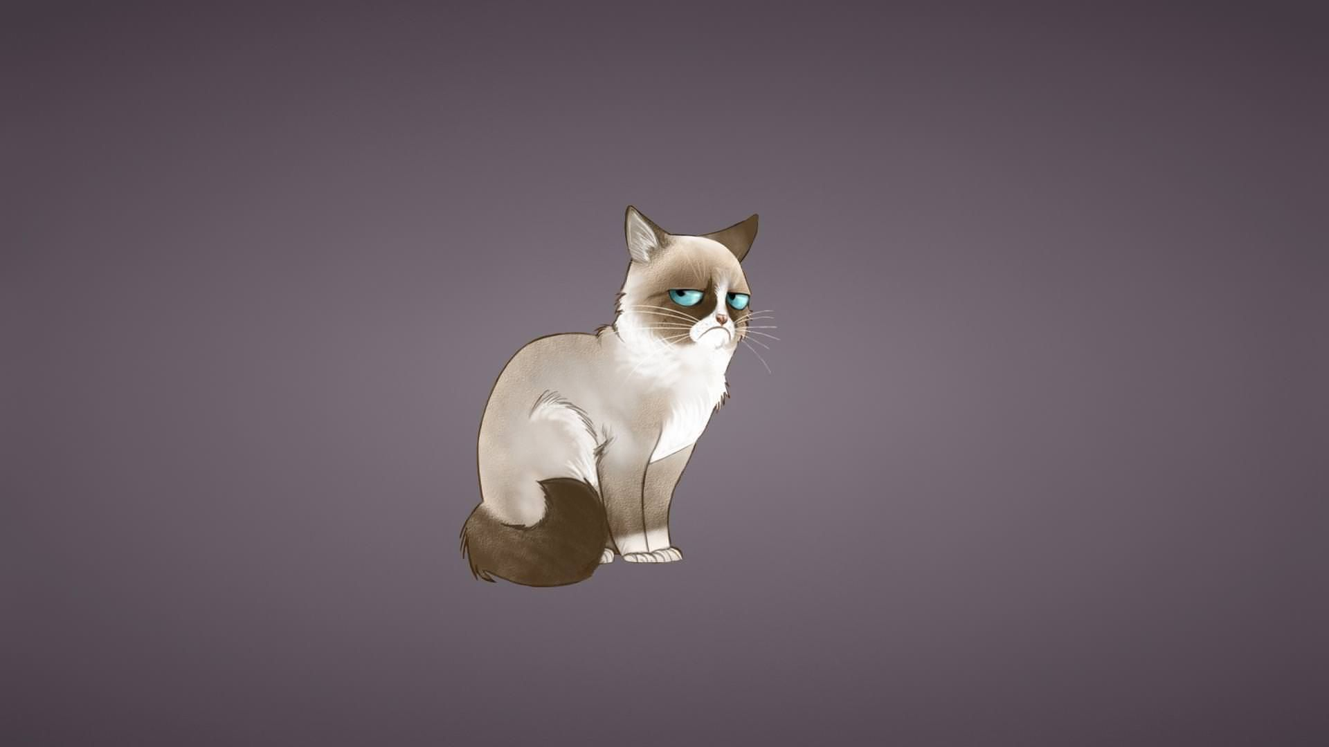 Grumpy Cat 3d Wallpapers Downlowd Free Zee Wallpapers Grumpy Cat Cat Wallpaper Space Cat