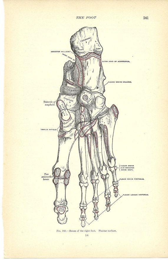 1913 Grays Anatomy Book Print Right Foot ACTUAL PRINT from   Etsy   Greys  anatomy book, Medical illustration, Book print
