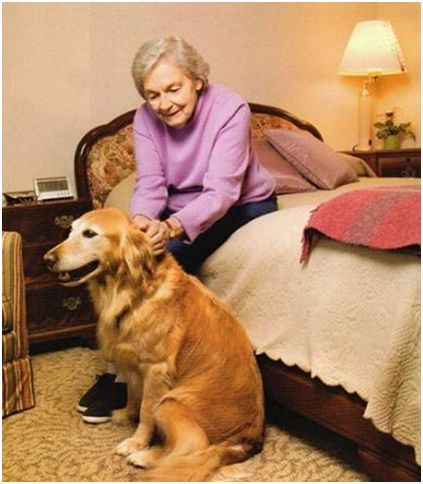Senior Citizen Superhero Forms Senior Dog Rescue Group
