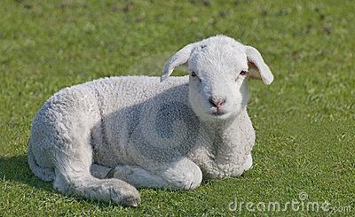 Lamb 2219901 Jpg 400 245 Cute Sheep Lamb Sweet Animals