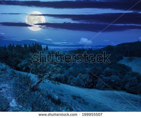 http://thumb101.shutterstock.com/display_pic_with_logo/957103/199955507/stock-photo-mountain-summer-landscape-trees-near-mead…