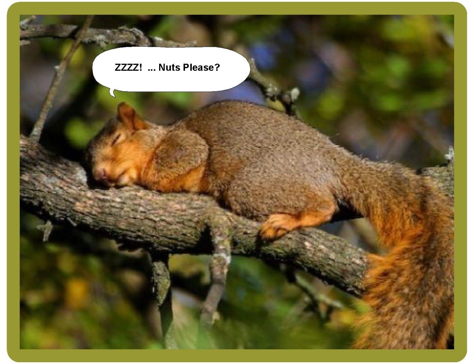 5 5 Funny Squirrel Sleeping Refrigerator Tool Box