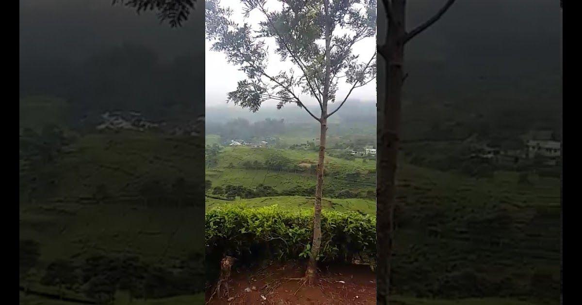 31 Pemandangan Indah Bogor Indahnya Pemandangan Puncak Bogor Youtube Download 8 Hotel Dengan Pemandangan Luar Biasa Di Bogor Mulai Di 2020 Pemandangan Kota Danau