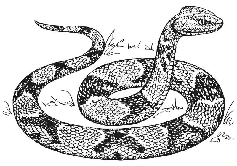 Ninjago Snakes Coloring Pages Snake Coloring Pages Snake Drawing Snake Sketch