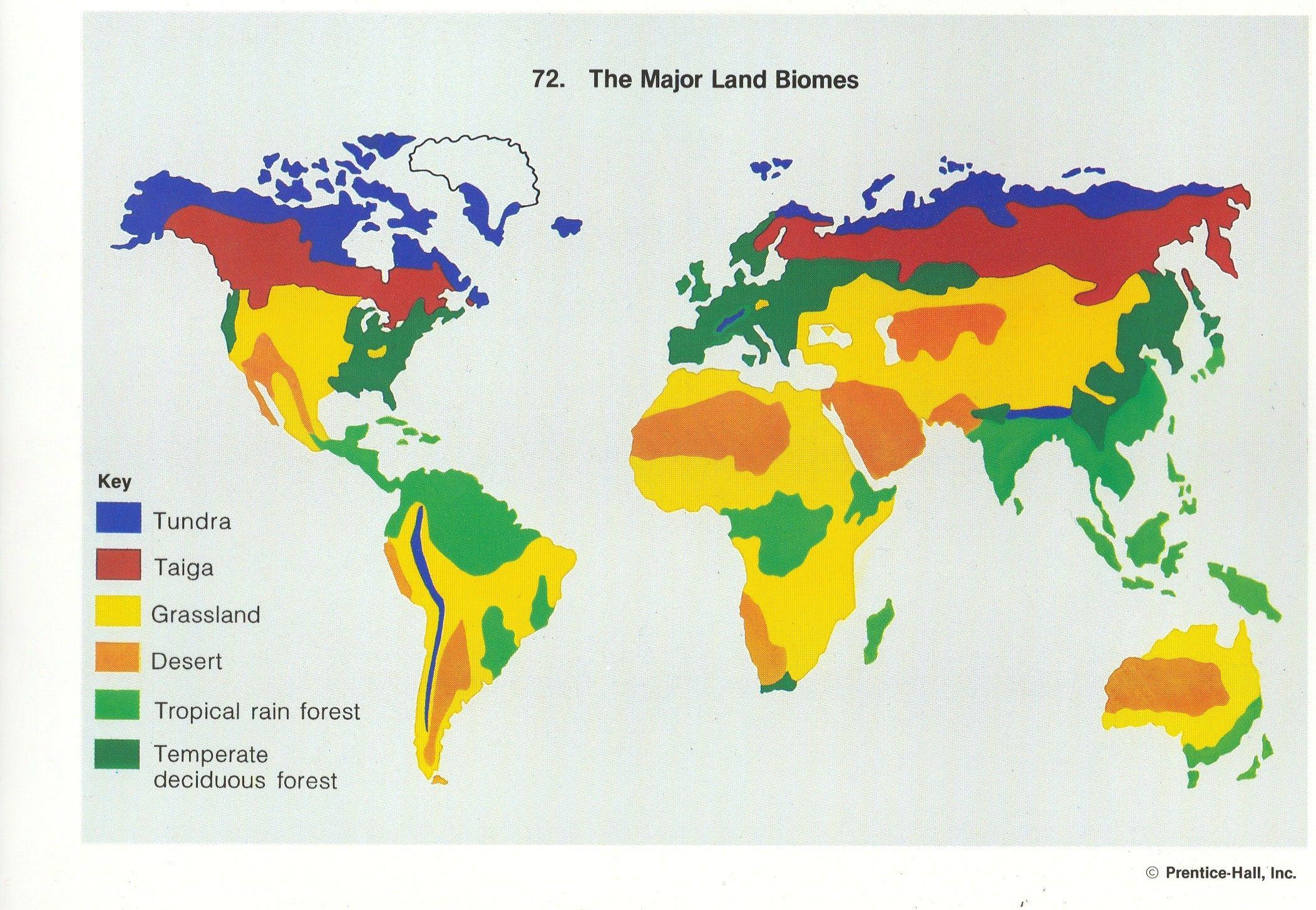 Land Biomes Worksheet Answers
