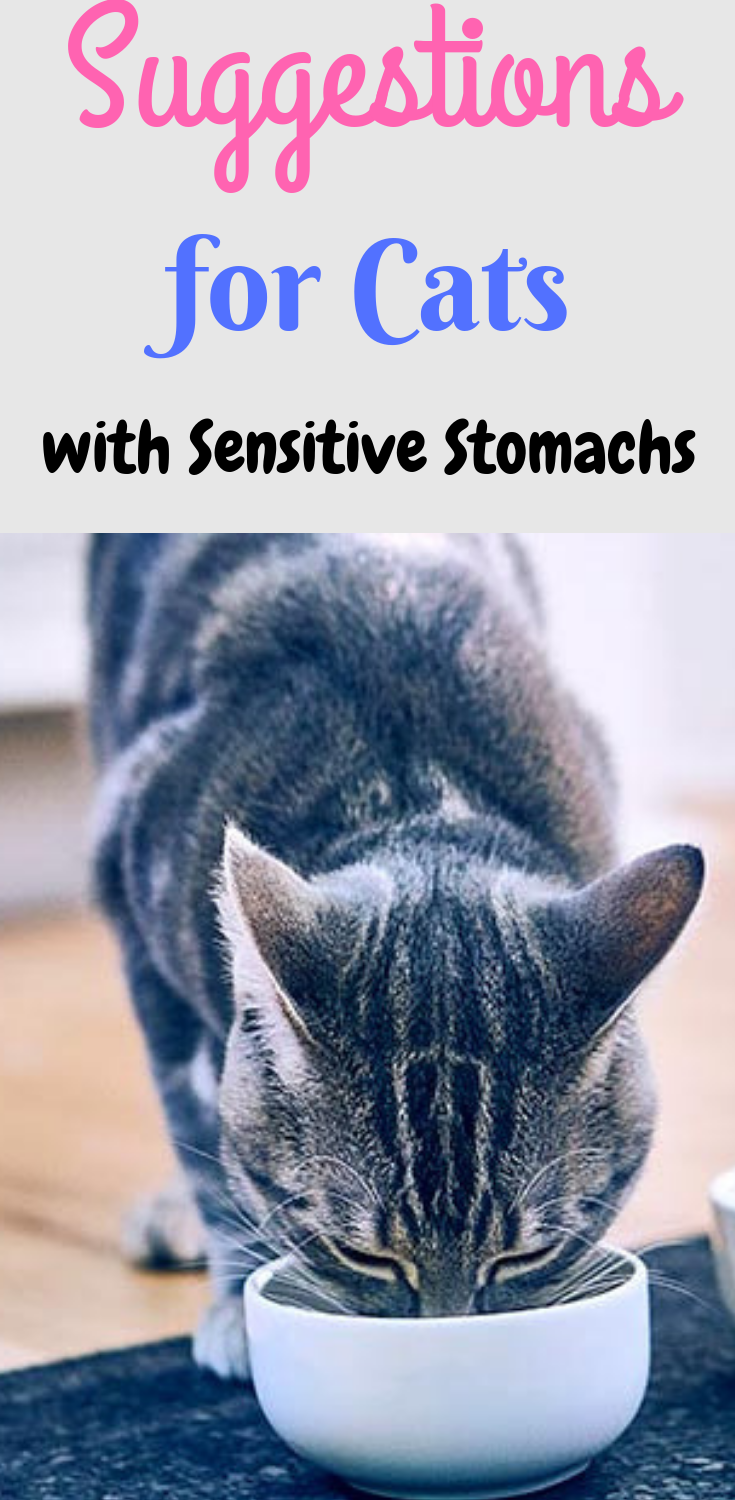 Tips And Suggestions For Cats With Sensitive Stomachs Sensitive Stomach Cat Food Best Cat Food Sensitive Stomach