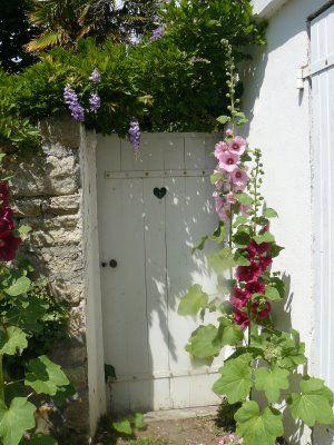 Roses trémières et glycine autour de la porte