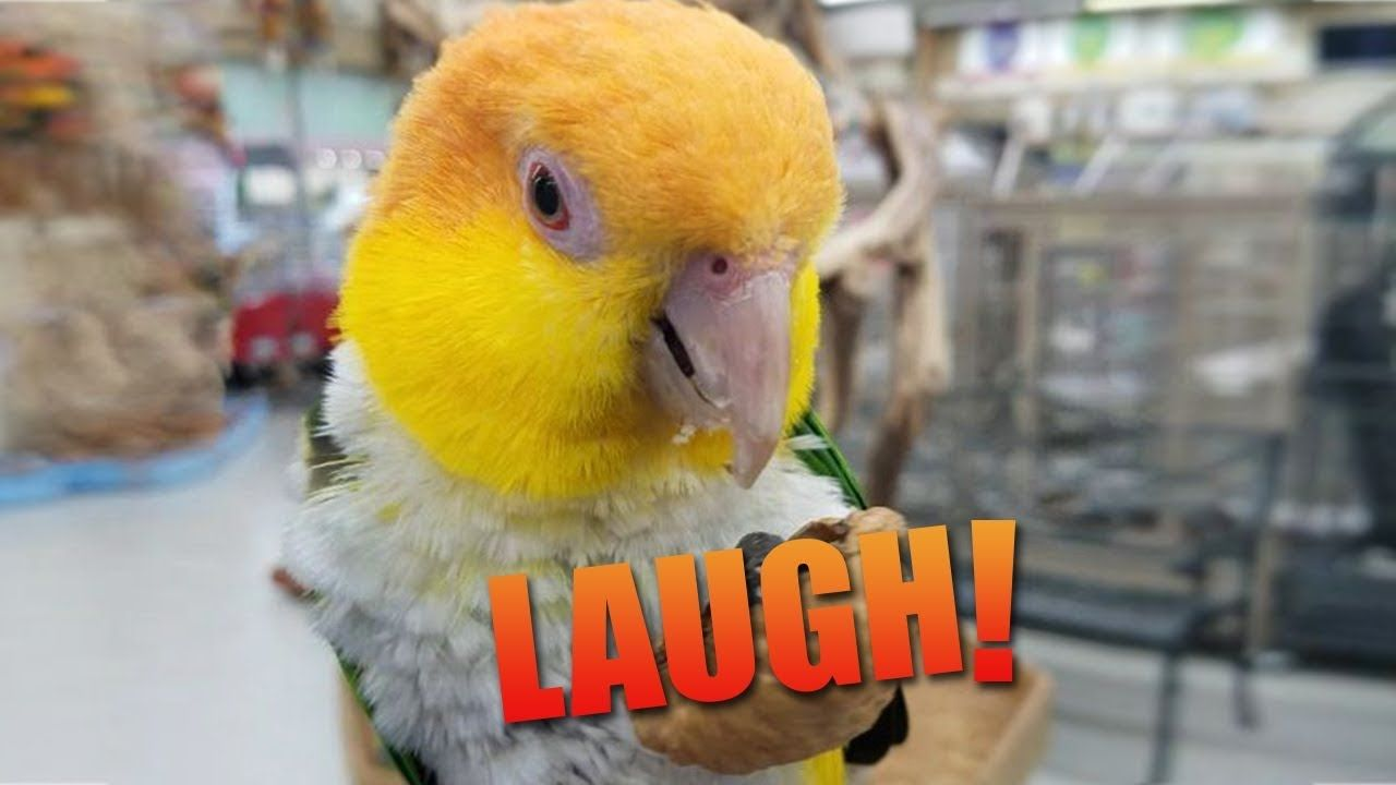 Funny Parrots Imitating Sounds l Baby Crying, Ringtone and
