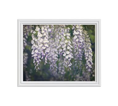 Wisteria Framed Print by Lupen Grainne, 20x16\