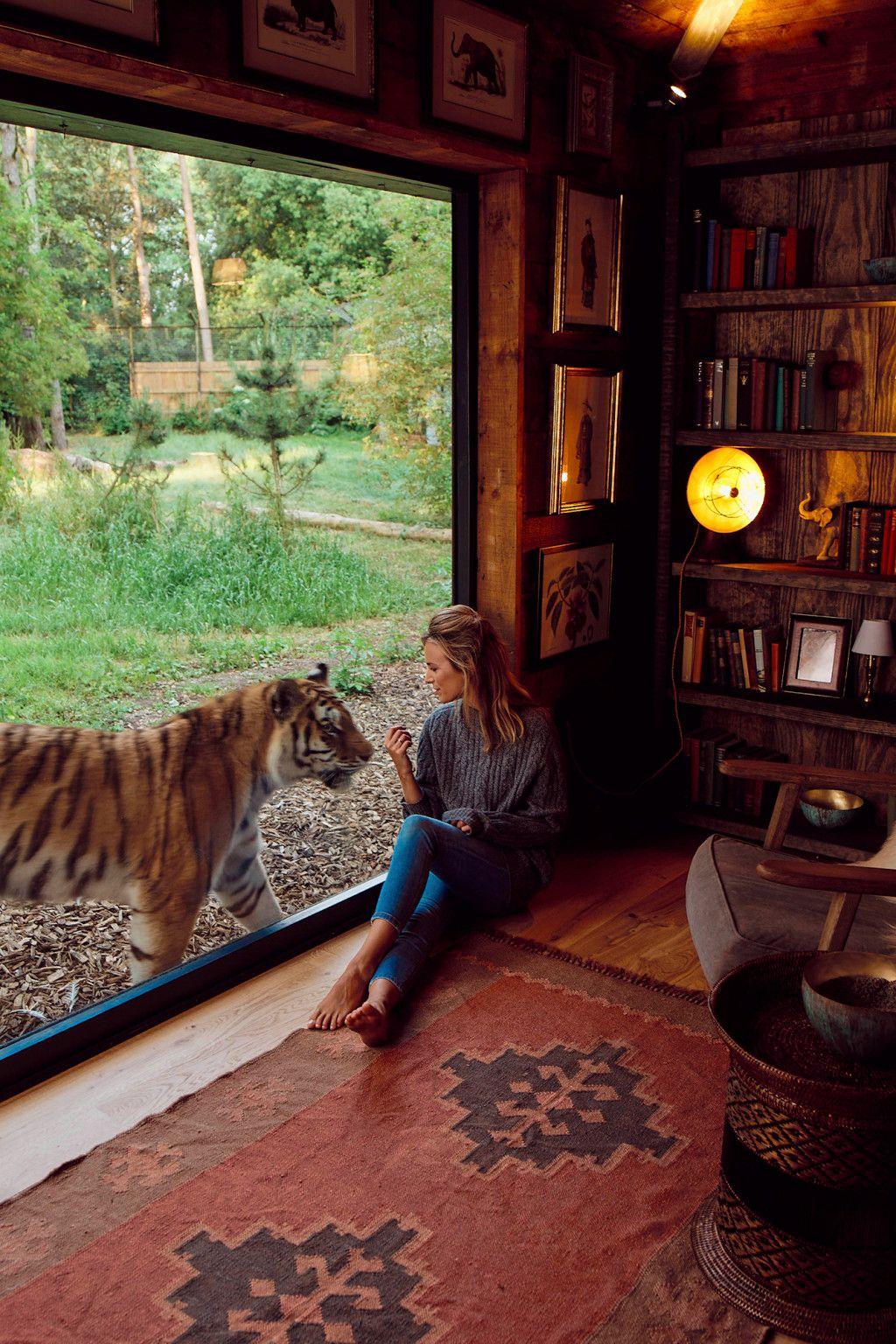 Lion Lodge Uk Safari Lodge Lodge Wild Animal Park