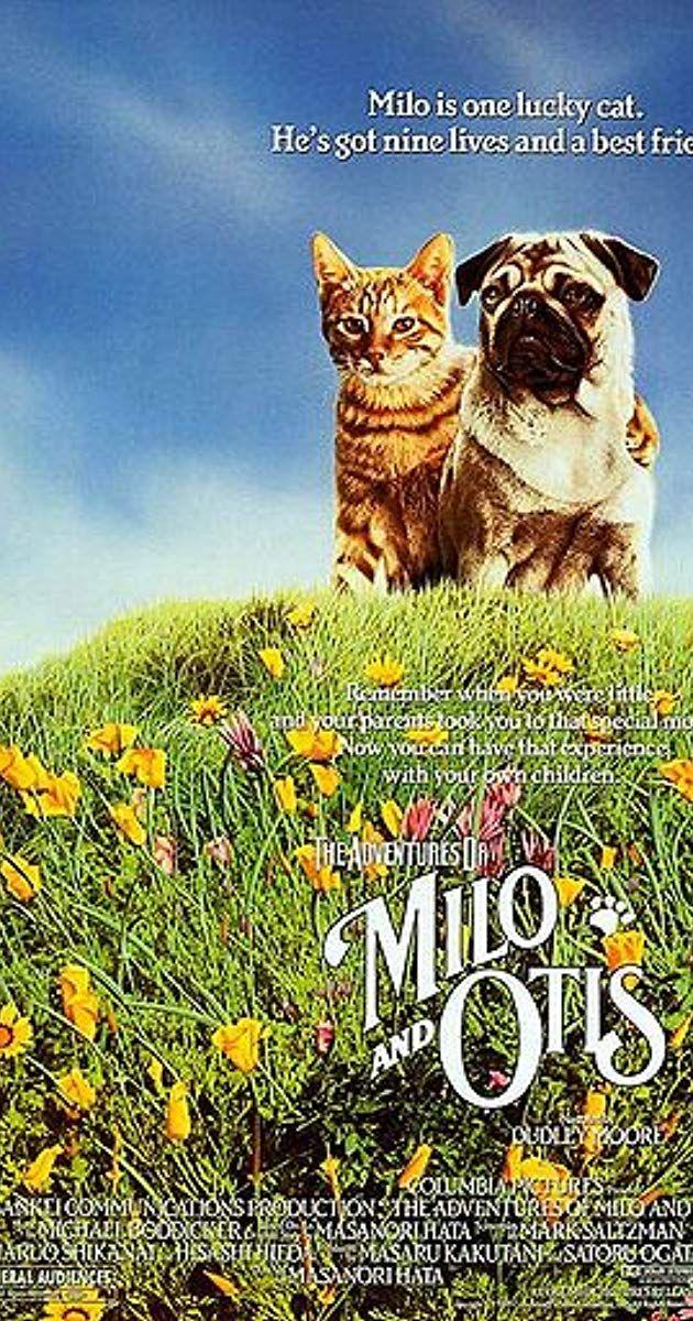 Directed by Masanori Hata. With Kyôko Koizumi, Chatran, Pû