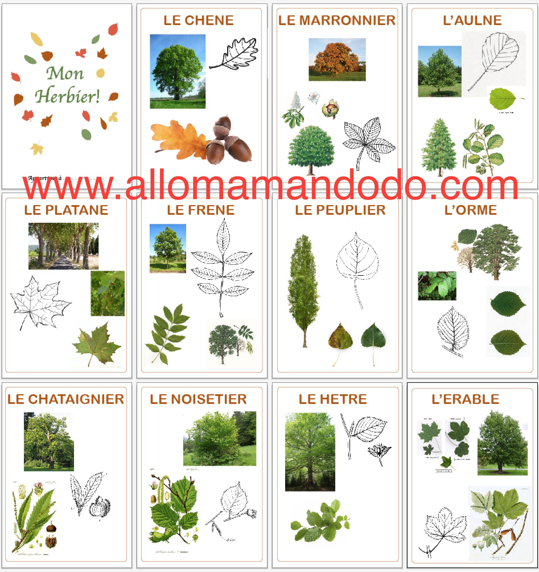 diy vive la for t fabrique ton herbier activit carnet d 39 automne automne pinterest. Black Bedroom Furniture Sets. Home Design Ideas