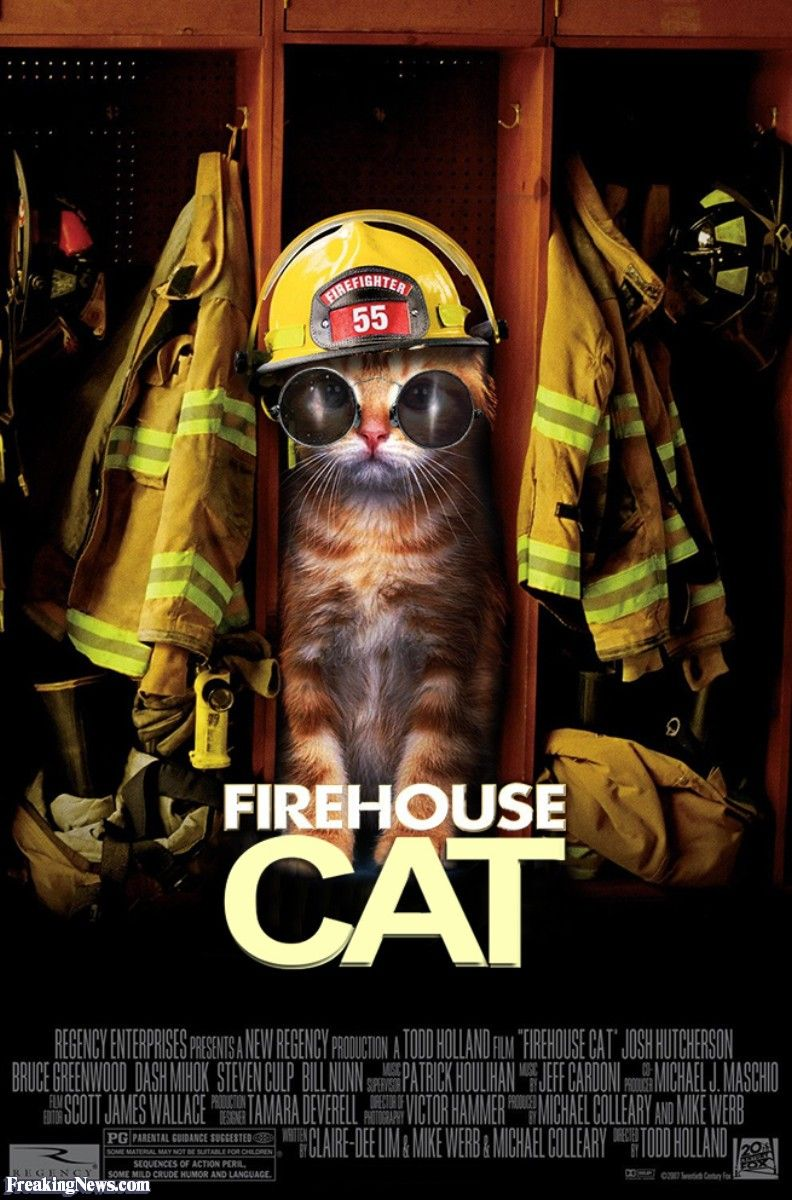 Firehouse cat Dog movies, Dogs, Cat movie
