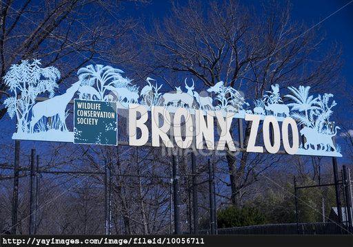 Royalty Free Image Of Bronx Zoo Sign Bronx Zoo Bronx Zoo