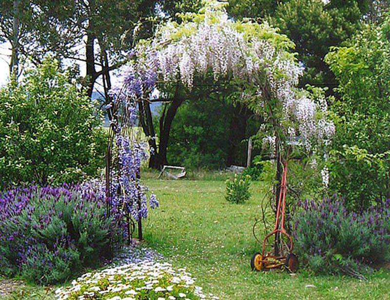 Wisteria Growing On A Garden Arch