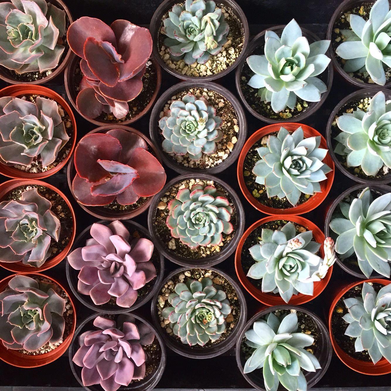 Beautiful diy terrarium kits and succulents