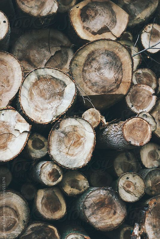 Stacked Chopped Wood By Jovana Rikalo Woods Photography Wood Wallpaper Autumn Aesthetic