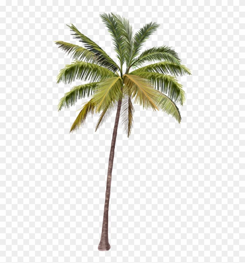 Find Hd Palmeras Png Coconut Tree Png Hd Transparent Png To Search And Download More Free Transparent Png Image Palm Tree Tattoo Ankle Coconut Tree Coconut