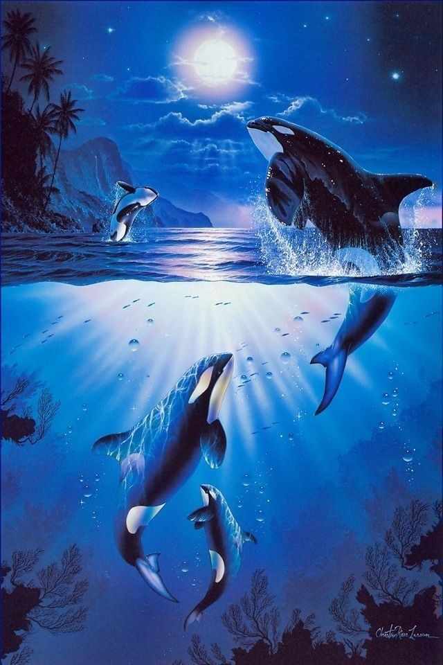 Dolphin Whale art