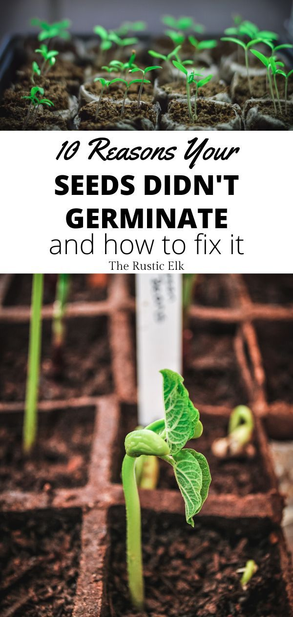 10 Reasons Your Seeds Aren't Germinating is part of Starting a garden, Container gardening vegetables, Garden types, Gardening tips, Plants, Garden seeds - Having problems getting your seeds to sprout  You're not alone  Here are 10 reasons you may not be seeing green this gardening season