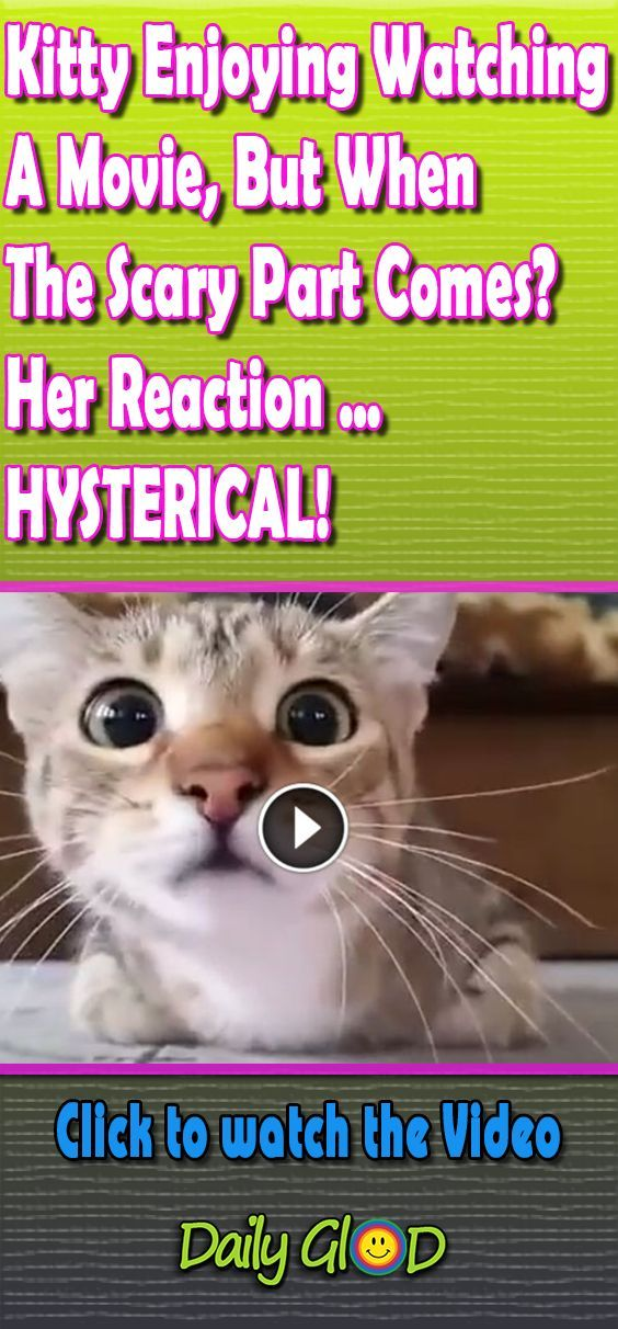 This Kitten Is Quite A Movie Buff But She Hates Scary Scenes This Is Hilarious Funny Cat Pictures Funny Animal Pictures Funny Cat Videos