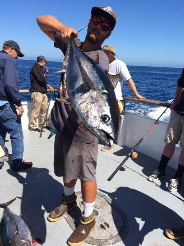 Prowler reporting 8 bluefin tuna to 40-pounds in US waters - Outdoors Sports – Captain Buzz Brizendine is reporting 8 bluefin tuna to 40 pounds so far this morning fishing in US waters. Most of the blues are being taken on a fly-lined sardine so make sure you take your time and choose a good hot bait as that can make all the difference for you. Boats fishing south of the border continue to catch fat kelp paddy yellowtail to over 30 pounds with some yellowfin tuna that range from small to...