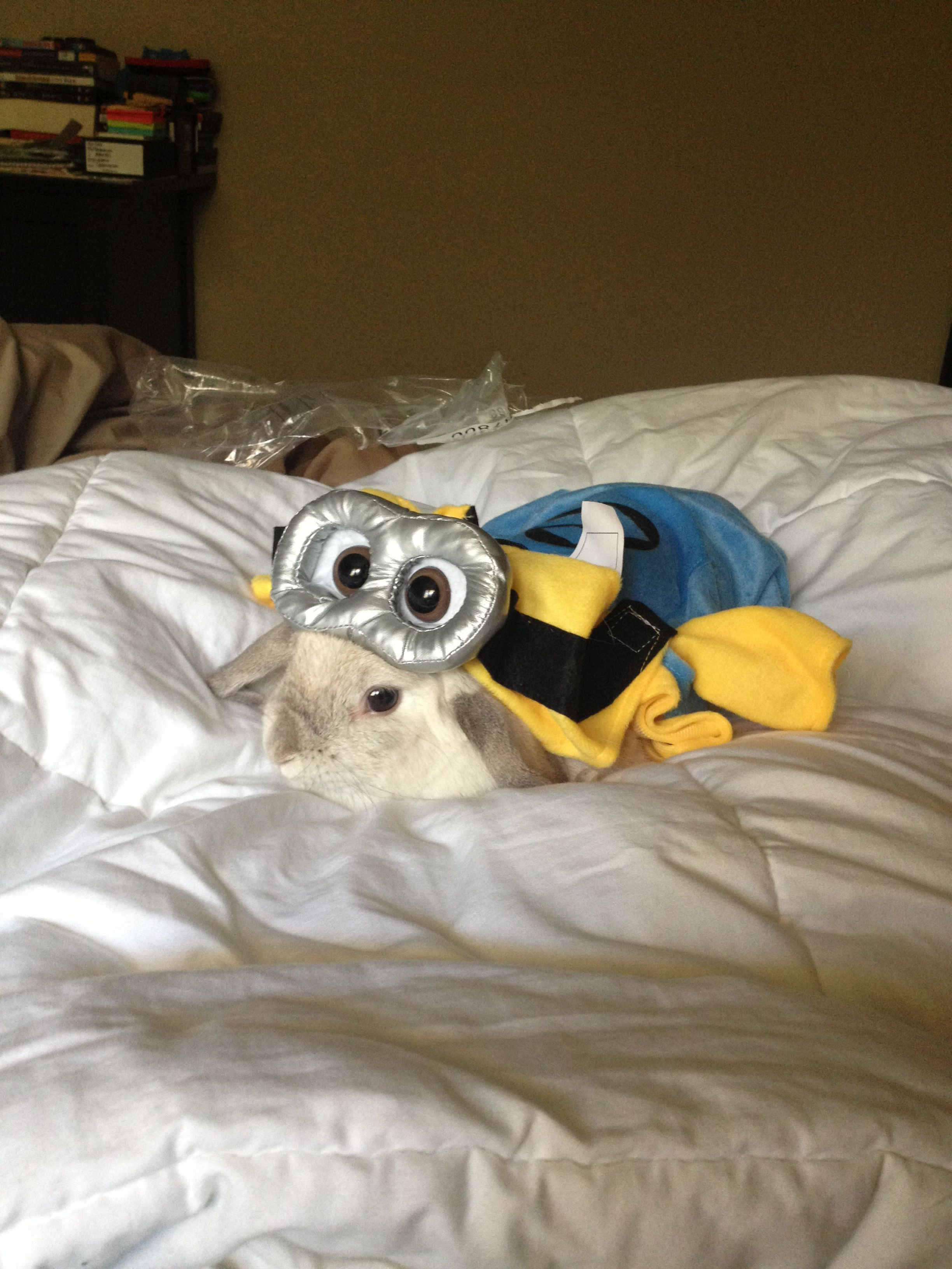 Pet bunny Halloween costume. Minion from despicable me