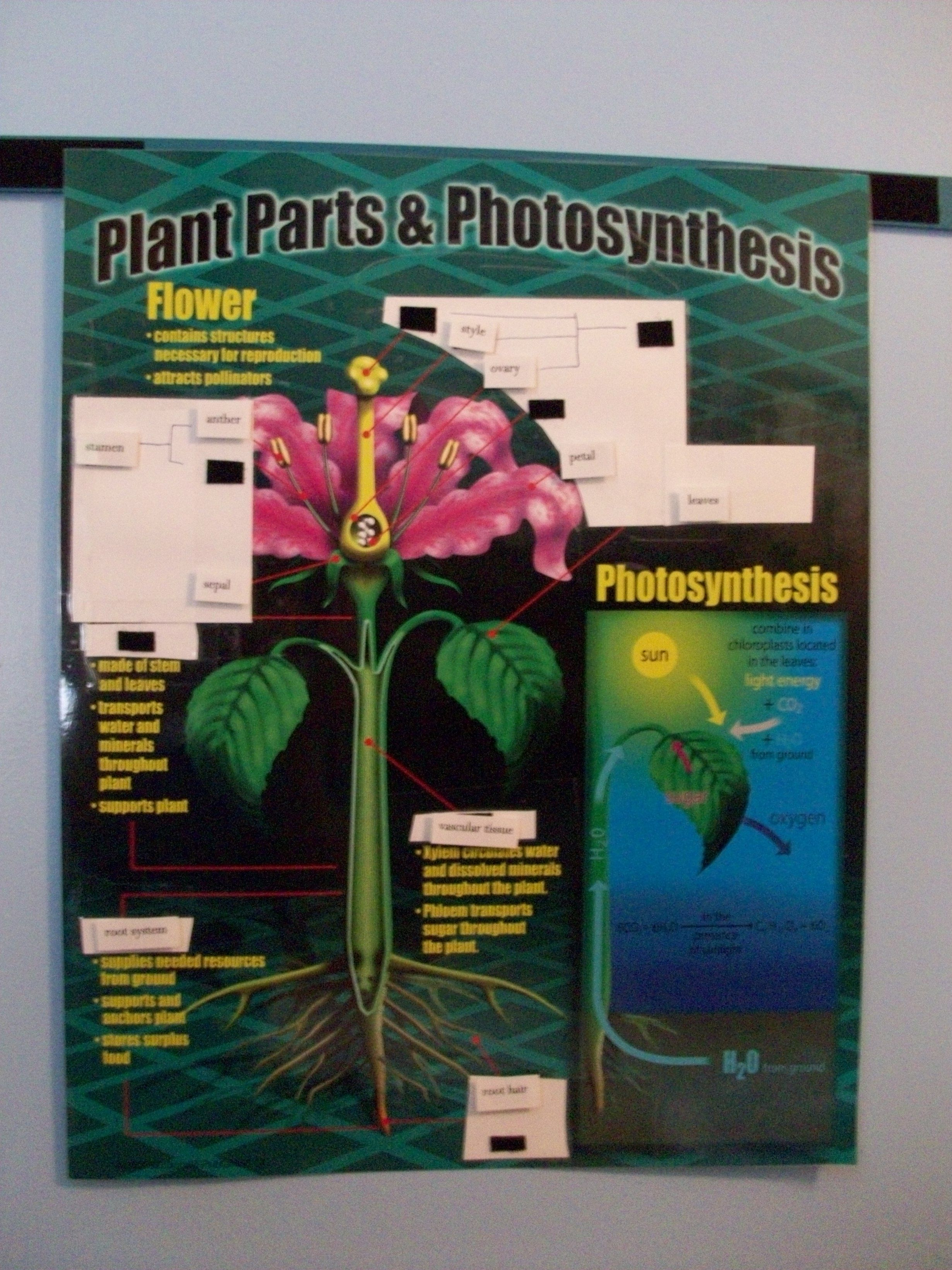 Poster Activities Parts Of Plant And Kids