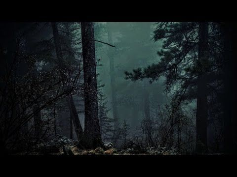 Forest At Night Crickets Owls Rain Wind In Trees Nature Sounds To Relax Study Sleep Tv Relax Youtube Night Forest Forest Sounds Night Rain