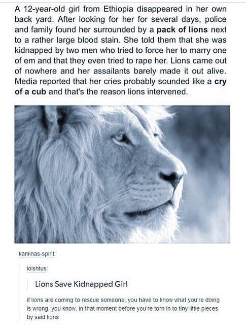 Photo of Lion saves kidnapped girl