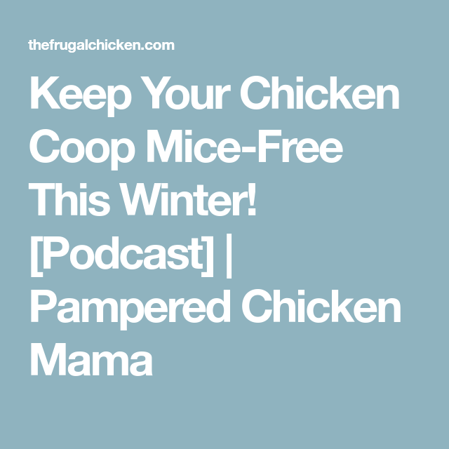 Keep Your Chicken Coop Mice-Free This Winter! [Podcast