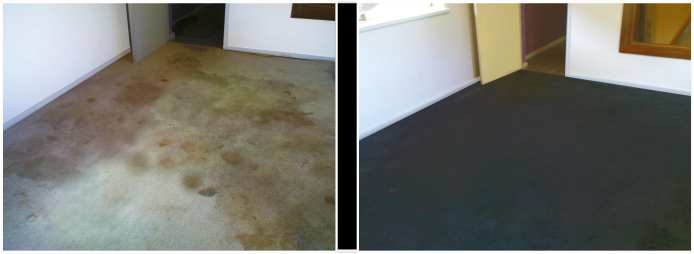 Colorcraft Carpet Dyeing Before And After Photographs In 2020 Carpet Decor Home Decor