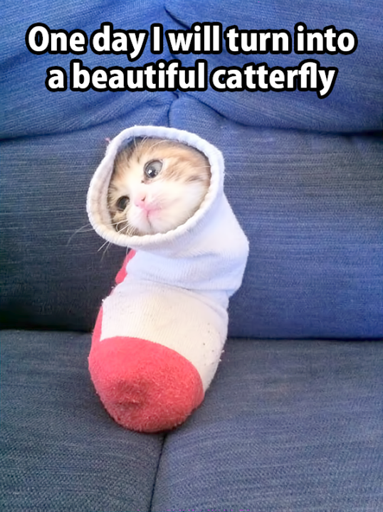 Cute Animals On Youtube Cute Animals Doing Silly Things Cute Little Animals Funny Animal Jokes Cute Animal Memes