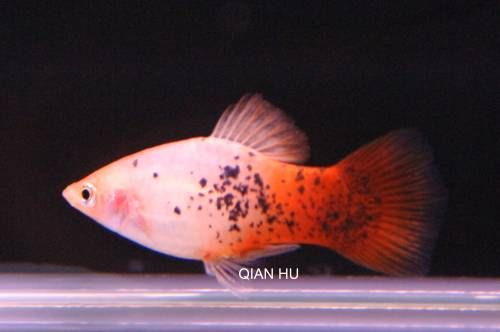 Page Not Found Fish Colorful Fish Fish Pet