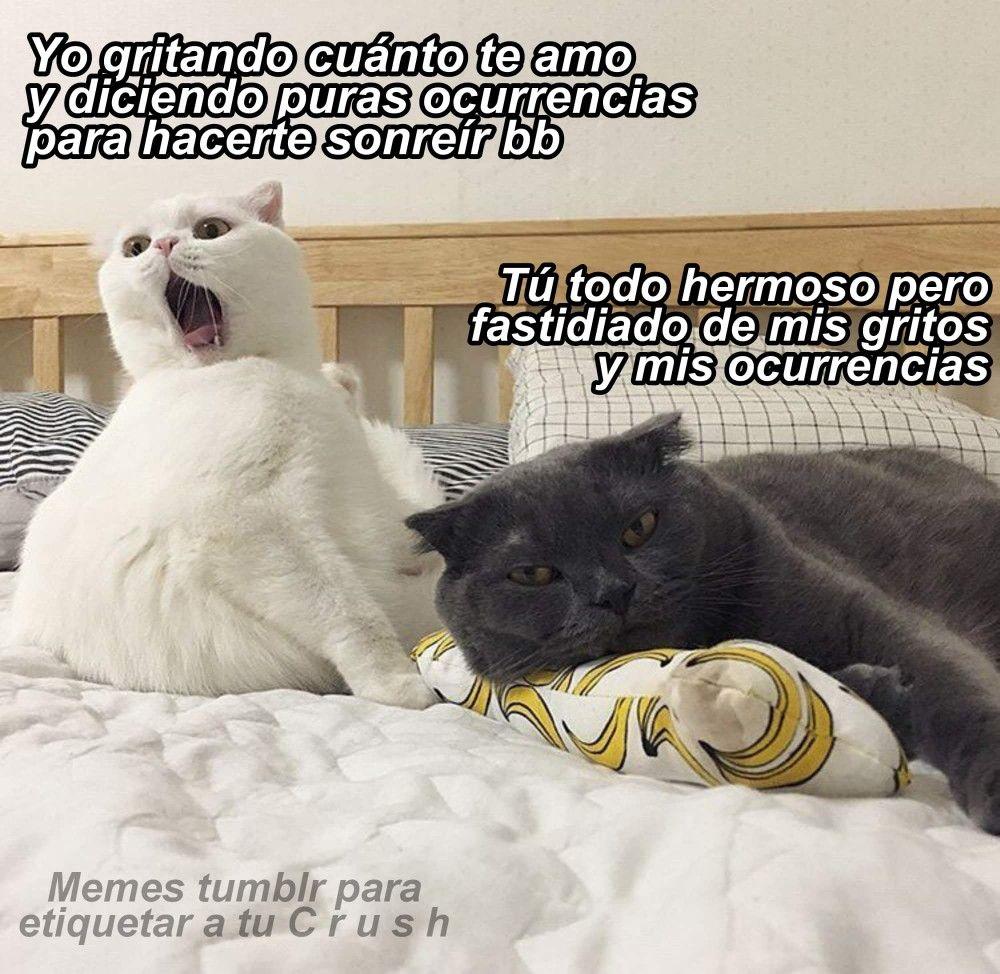Pin De Leivis Solano En L Meme Gato Gatos Cool Y Frases