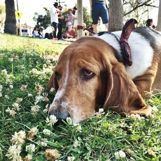 21 Times Basset Hounds Were Just Really Dorky Dog Names Basset