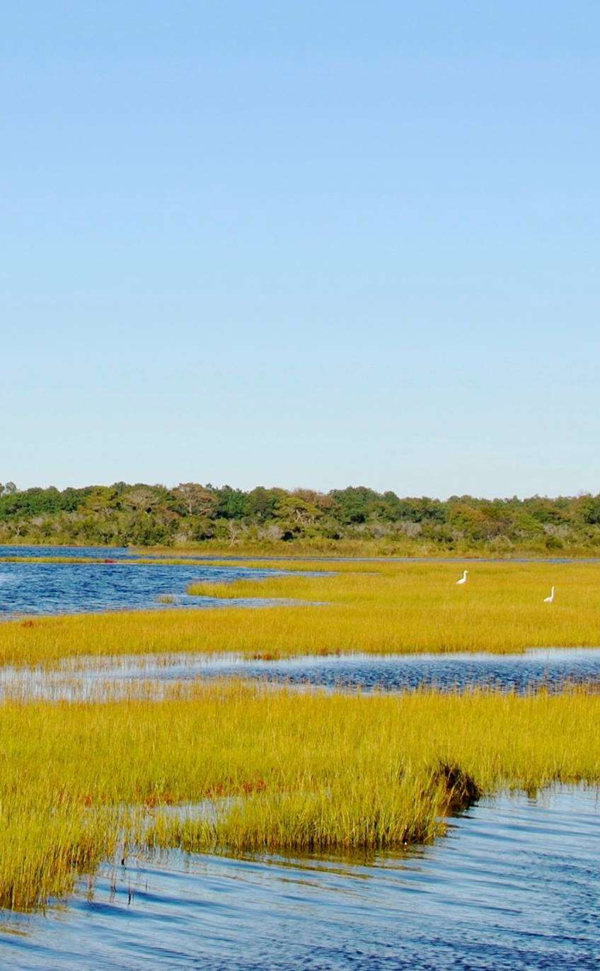 Assateague Island National Seashore (Maryland)