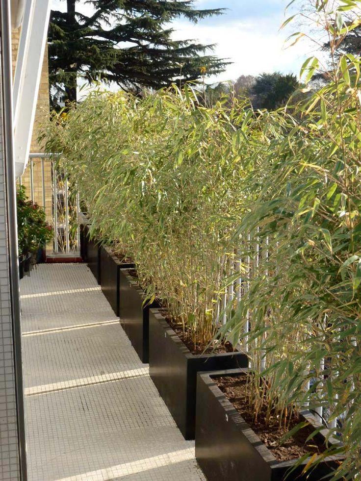 une haie de bambou | Canisse terrasse | Bambous jardin, Bambou ...