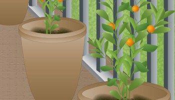 C mo cultivar rboles frutales en macetas hortalizas en casa frutales en maceta arboles - Como plantar arboles frutales ...