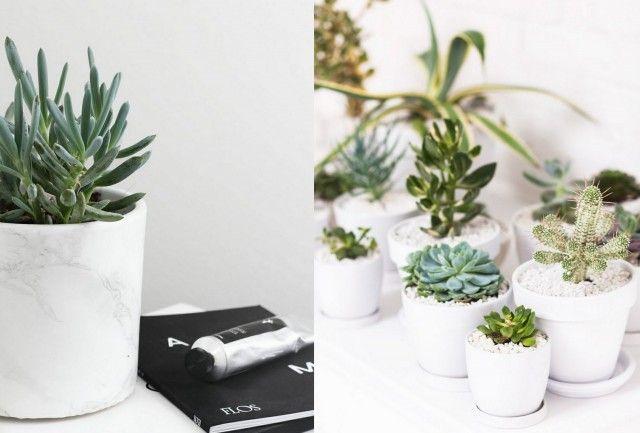 Les Succulentes Des Plantes Tres Deco Plantes Grasses Blog