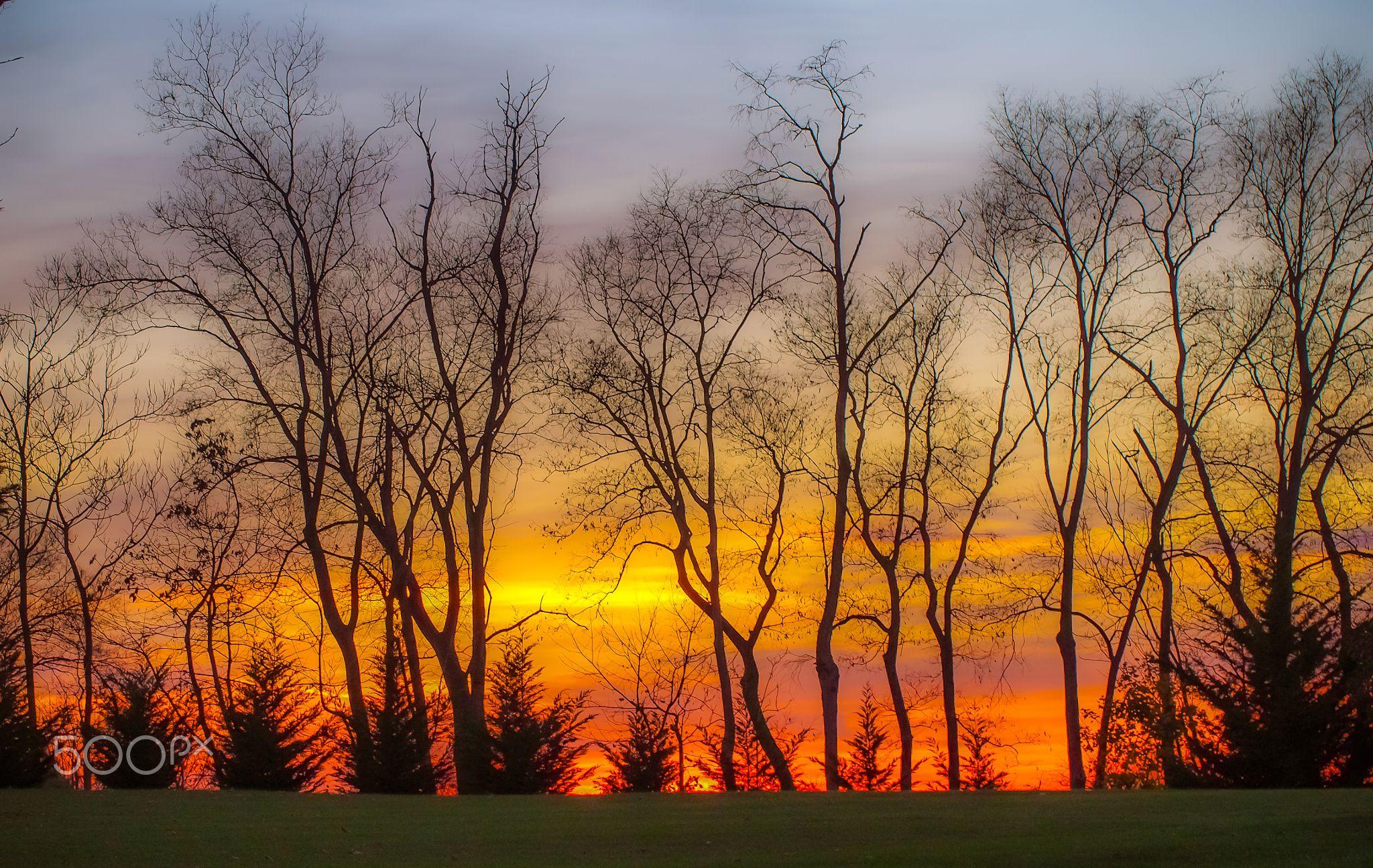 Sunset Thanksgiving Day - OLYMPUS DIGITAL CAMERA