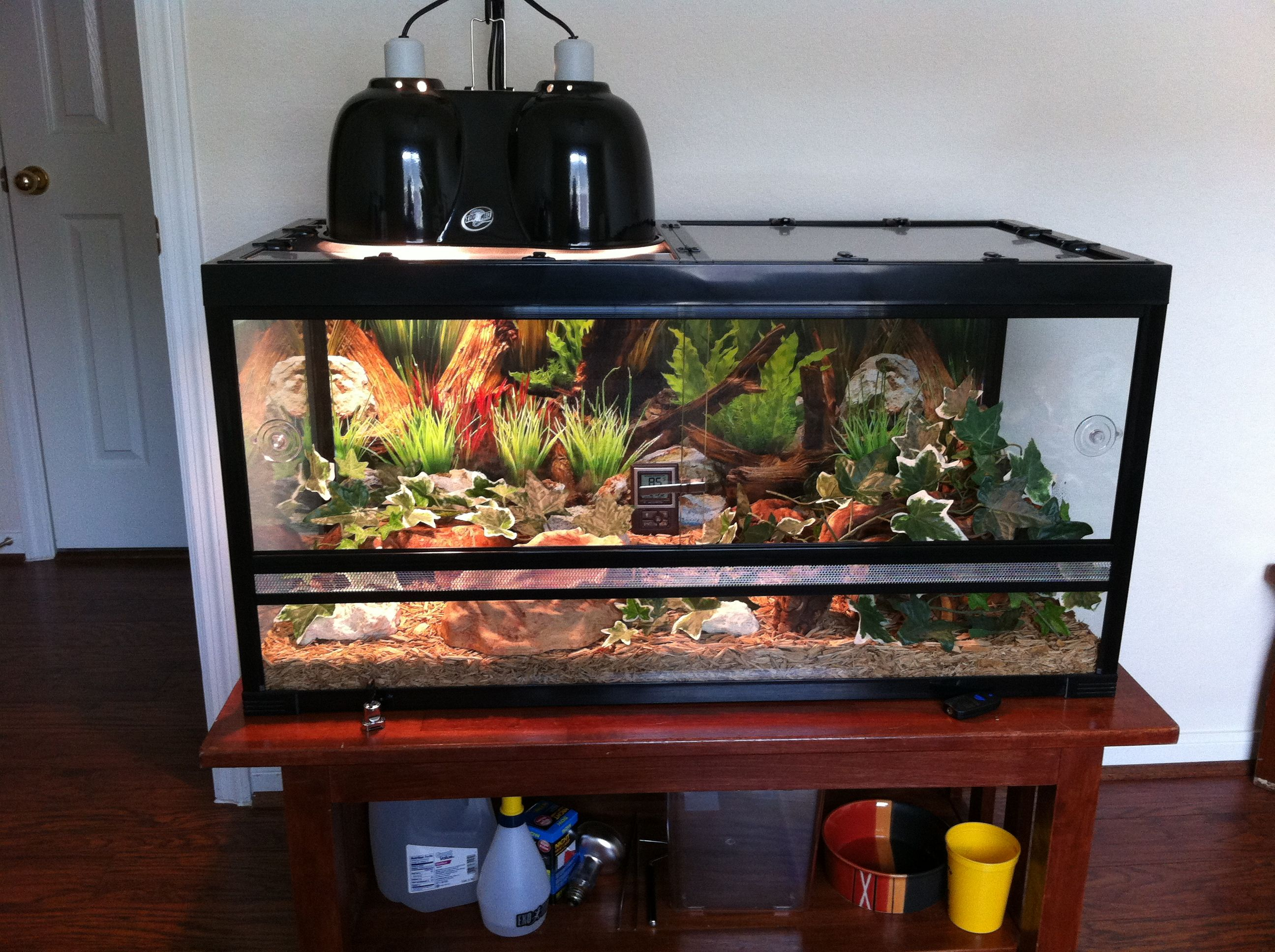 snake terrarium snake pinterest snake terrarium snake and reptiles. Black Bedroom Furniture Sets. Home Design Ideas