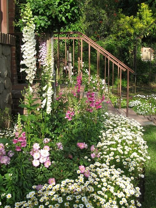 Cottage garden like the white daisy border garden ideas for Cottage garden ideas