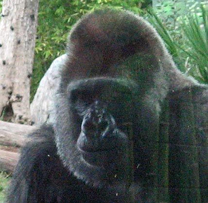 san diego zoo pictures - Google Search
