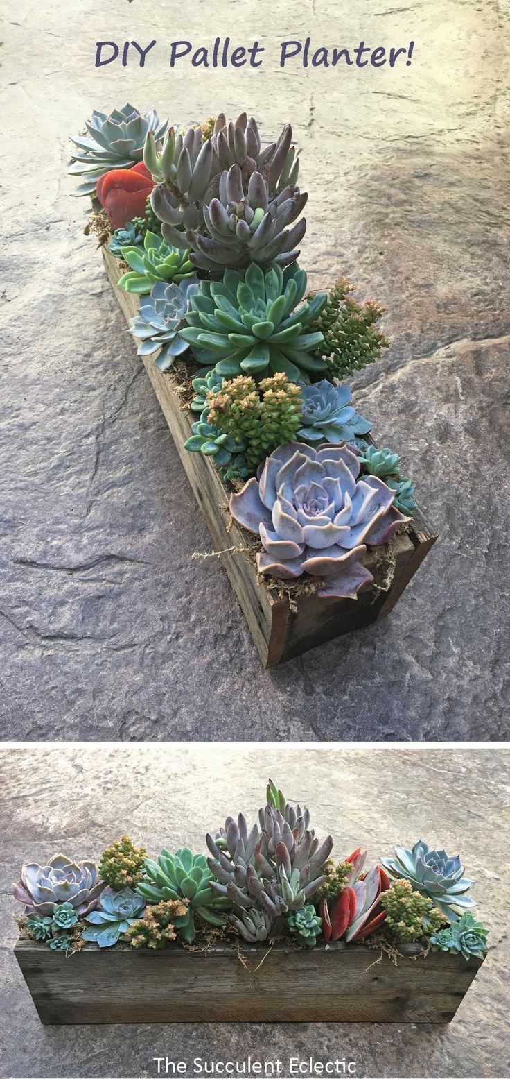 Photo of DIY pallet tub for succulents